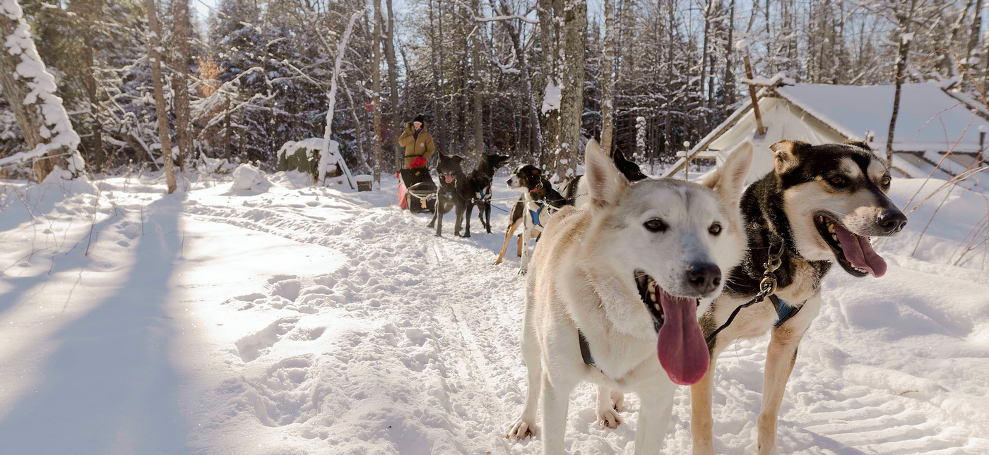 dog sledding in ontario